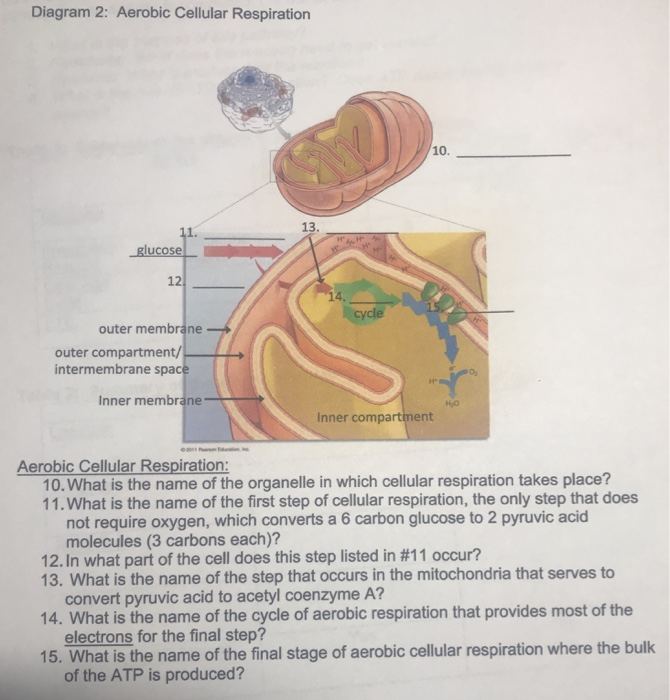 Solved diagram 2 aerobic cellular respiration 10 13 1 diagram 2 aerobic cellular respiration 10 13 1 12 cycle outer membrane outer ccuart Images