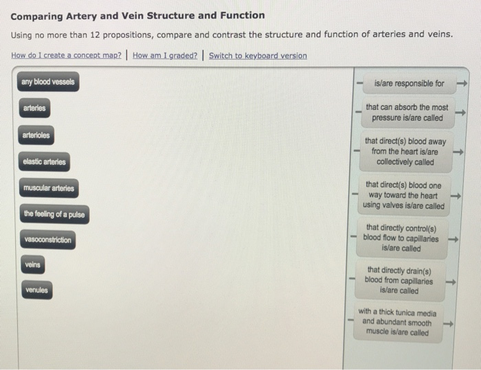 Solved Comparing Artery And Vein Structure And Function U