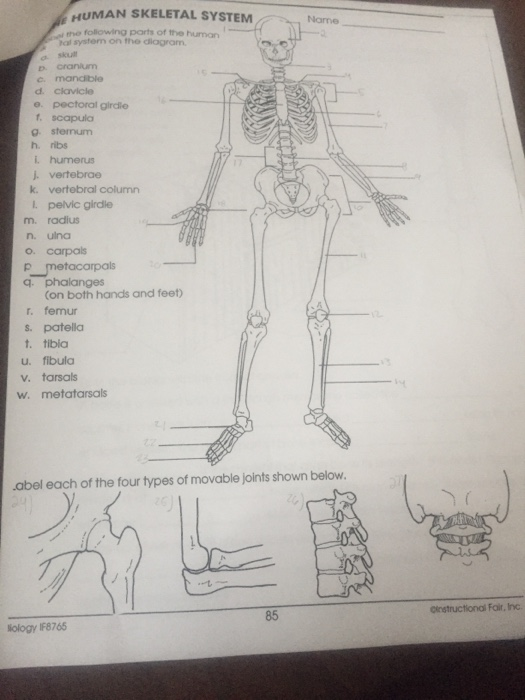 human skeletal system the following ports of the human name al systerm on  the dlagram o