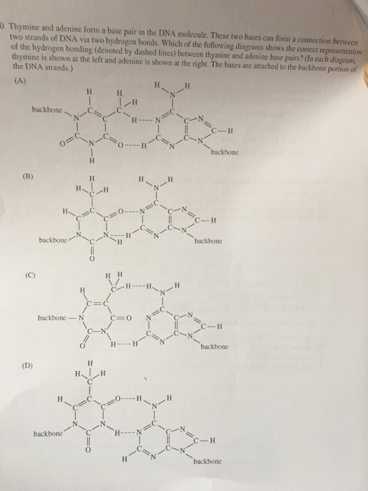 Solved thymine and adenine form a base pair in the dna mo thymine and adenine form a base pair in the dna molecule these two ccuart Images