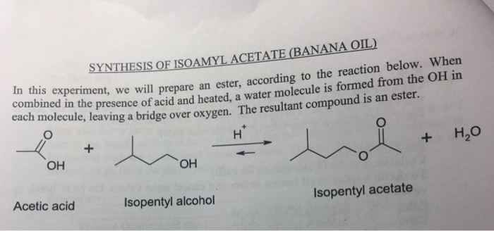 Solved Synthesis Of Isoamyl Acetate Banana Oil In This