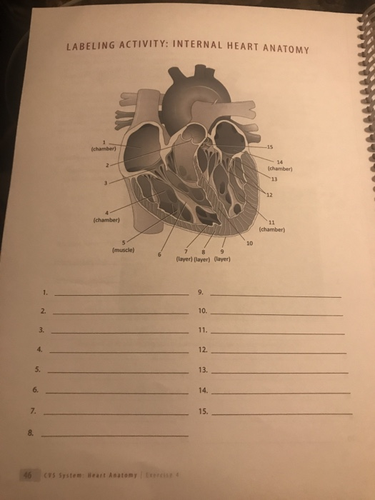 Solved Labeling Activity Internal Heart Anatomy 14 Chamb