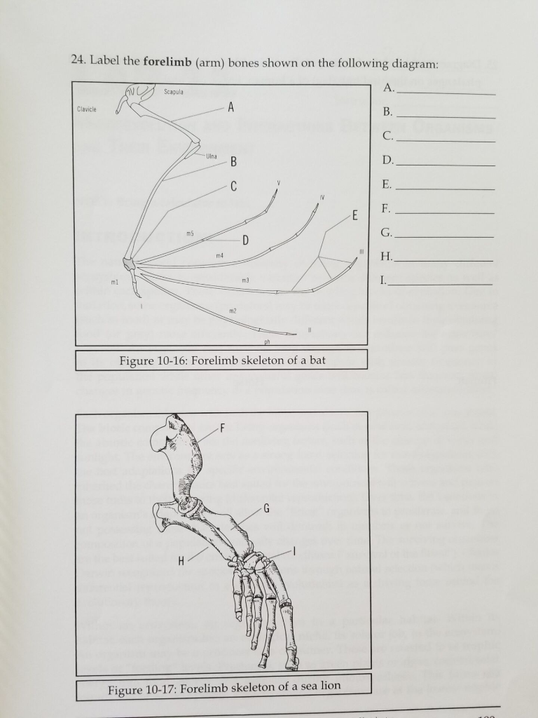 label the forelimb (arm) bones shown on the following diagram: scapula