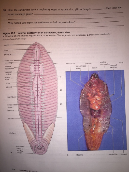 Solved Internal Anatomy 1 If So Directed By Your Instruc