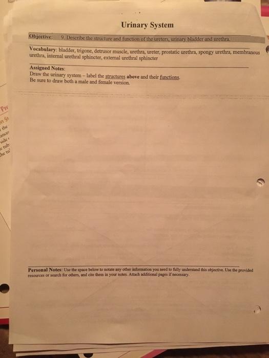 Solved: Urinary System Vocabulary: Bladder, Trigone, Detru