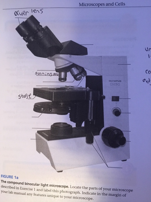Solved microscopes and cells gruer co figure 1a the compo microscopes and cells gruer co figure 1a the compound binocular light microscope locate the parts ccuart Choice Image