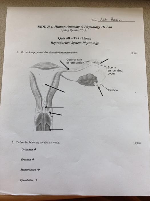 Solved: Jaude Tansan Name: BIOL 234: Human Anatomy & Physi