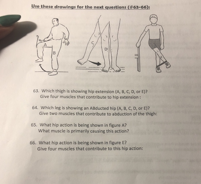 Use these drawingsforthe next questions(#63-66): 63. Which thigh is showing hip extension (A, B, C, D, or E)? Give four muscles that contribute to hip extension: 64. Which leg is showing an ABducted hip (A, B, C, D, or E)? Give two muscles that contribute to abduction of the thigh: 65. What hip action is being shown in figure A? What muscle is primarily causing this action? 66. What hip action is being shown in figure E? Give four muscles that contribute to this hip action: