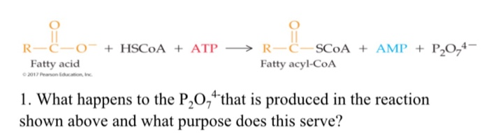 R-C-O-+ HSC0A + ATP → R-C CoA + AMP + Fatty acid Fatty acyl-COA 1. What happens to the P20, hat is produced in the reaction shown above and what purpose does this serve?