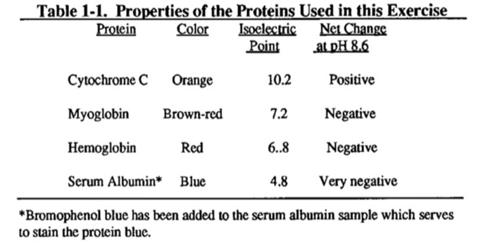 Table 1-1. Properties of the Proteins Used in this Exercise Isoelectric Point Net Change at pH 8.6 Protein Color 10.2 Cytochr