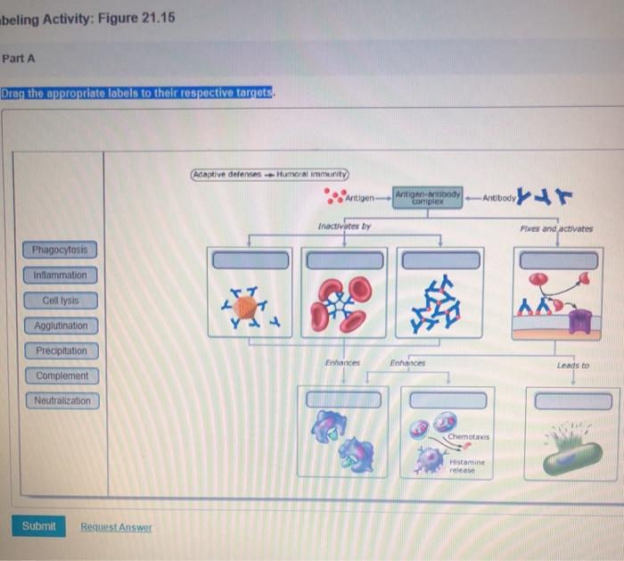 Solved: It 1 Homework- Endo/Heart Ncept Map: Determining C