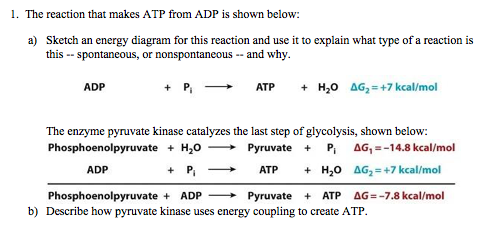 solved 1�the reaction that makes atp from adp is shown be Electron Transport Chain Diagram 1�the reaction that makes atp from adp is shown below a) sketch