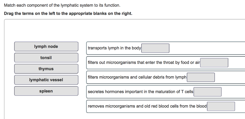 Solved Match Each Component Of The Lymphatic System To It