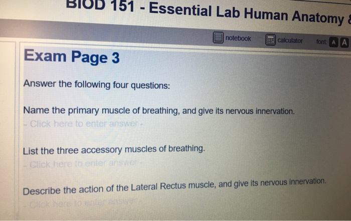 Solved: BIOD 151 Essential Lab Human Anatomy Exam Page 3 A ...