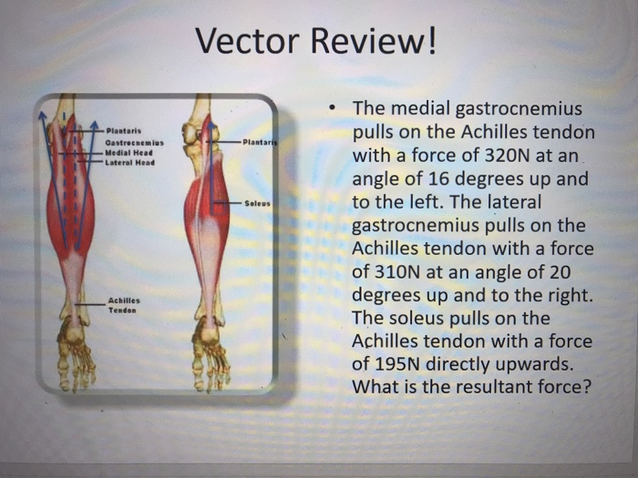 Solved Vector Review The Medial Gastrocnemius Pulls On T
