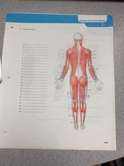 Solved Review Practice Sheet 2 3 Label Each Muscle 2 295 Chegg