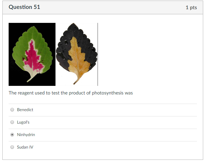 Question 51 1 pts The reagent used to test the product of photosynthesis was O Benedict O Lugols O Ninhydrin O Sudan IV