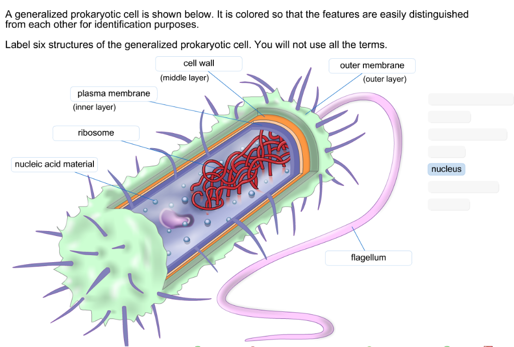 Amazing Solved A Generalized Prokaryotic Cell Is Shown Below It Wiring Digital Resources Indicompassionincorg