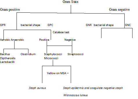Solved Unknown Bacteria Identification Flow Chart Chegg