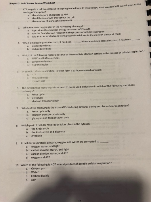 Solved: Chapter 7: End-Chapter Review Worksheet 1. ATP Usa ...