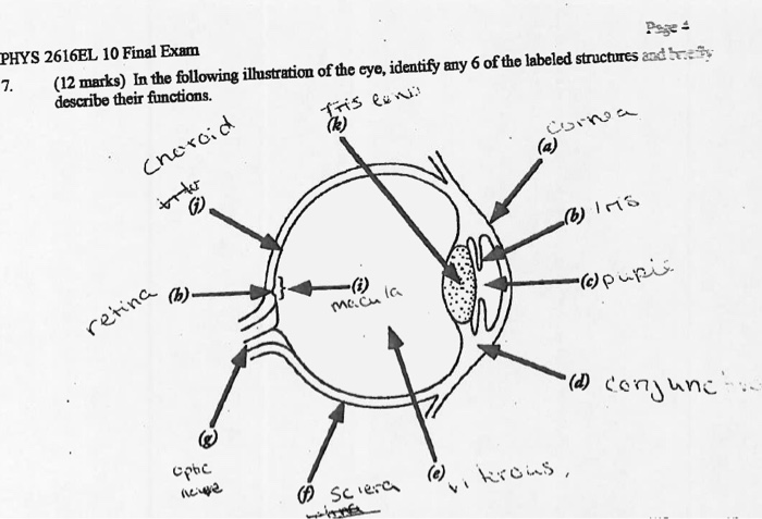Solved in the following illustration of the eye identify pese phys 2616el 10 final exam labeled structures and y 7 12 marks ccuart Choice Image