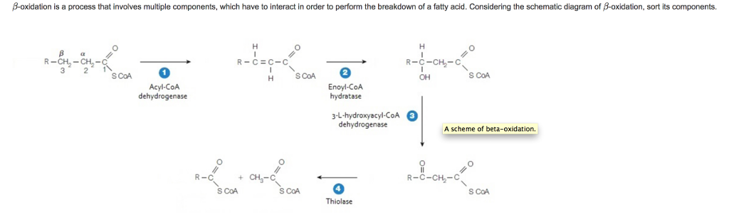 solved � oxidation is a process that involves multiple co Aldehydes Diagram