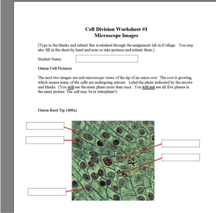 Solved Cell Division Worksheet 1 Microscope Images Type