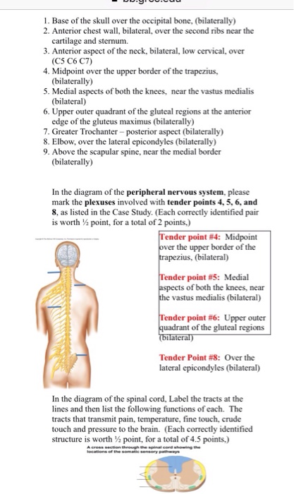 Solved: Human Anatomy & Physiology ITheory Case Study #2 ...