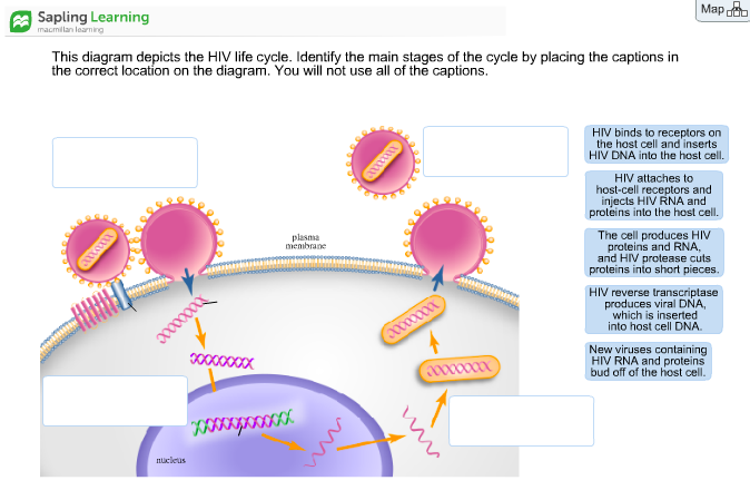 Blank Diagrams Of Hiv - Wiring Diagram & Cable Management on