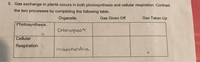 compare and contrast photosynthesis and cellular respiration