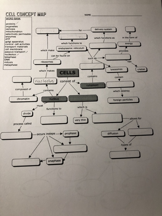 Cell Concept Map Answers Solved: CELL CONCEPT MAP NAME Proteins Organelles Selectiv