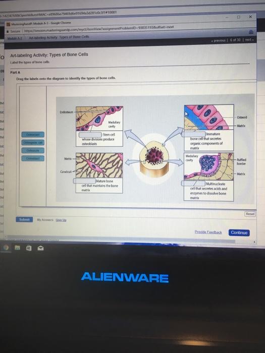e896866794696 91694a36281c0c31+50001 938351938ioffset-next da at ng acity  types of bone cells e