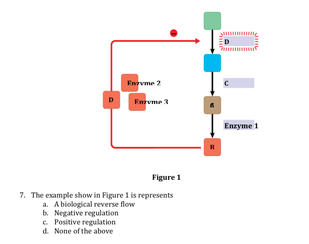 Ezvme 2 Ezvme 3 Enzyme 1 Figure 1 7. The example show in Figure 1 is represents a. A biological reverse flow b. Negative regu