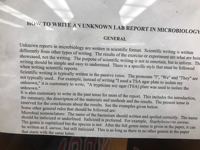 identification of bacteria lab report