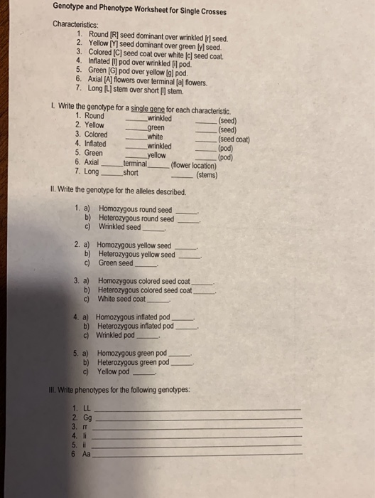Solved: Genotype And Phenotype Worksheet For Single Crosse ...