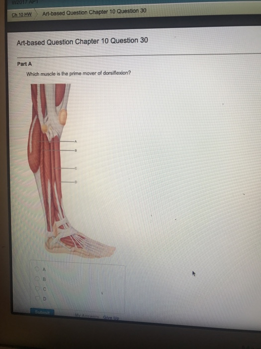 Solved Which Muscle Is The Prime Mover Of Dorsiflexion Chegg