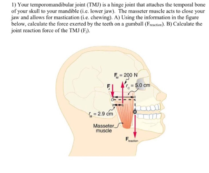 Solved Your Temporomandibular Joint Tmj Is A Hinge Join