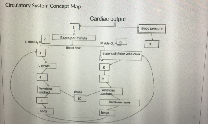 Solved: Circulatory System Concept Map Cardiac Output Bloo ...