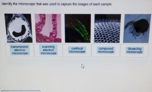 how to identify transmission electron microscopy