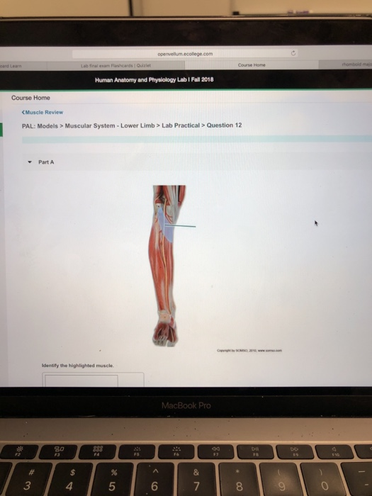 Solved: Ope Wellum ecollege com Human Anatomy And Physiolo