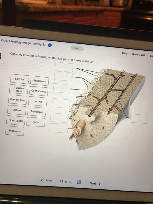 Solved Quiz Histology Integumentary S Saved Help Save Chegg Com