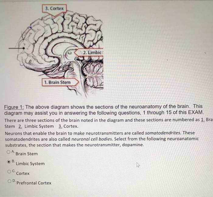Solved 3 cortex 2 limbic 1 brain stem figure 1 the ab limbic 1 brain stem figure 1 the above diagram ccuart Gallery