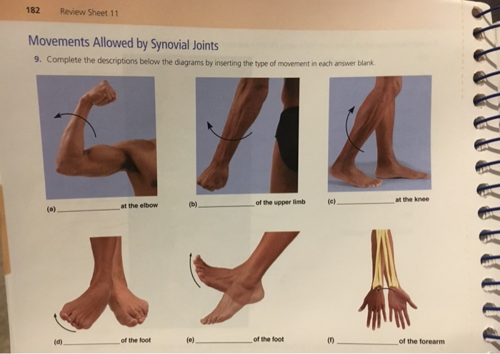 182 review sheet 11 movements allowed by synovial joints 9  complete the  descriptions below the