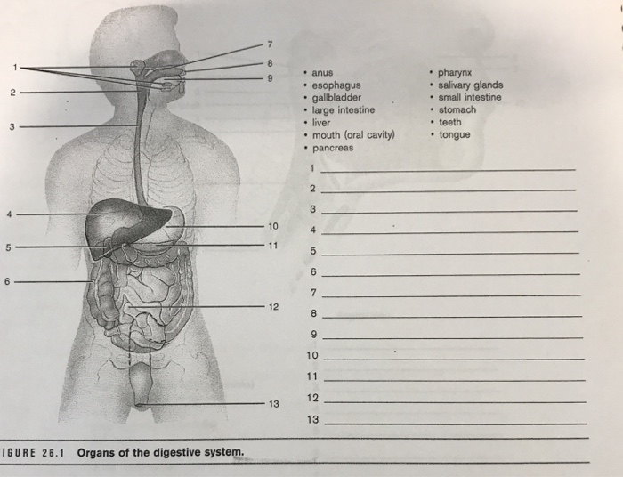 Solved: Organs Of The Digestive System. Anus Esophagus Gal ...