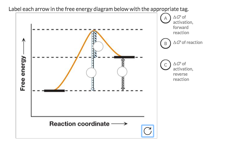 solved label each arrow in the free energy diagram below. Black Bedroom Furniture Sets. Home Design Ideas