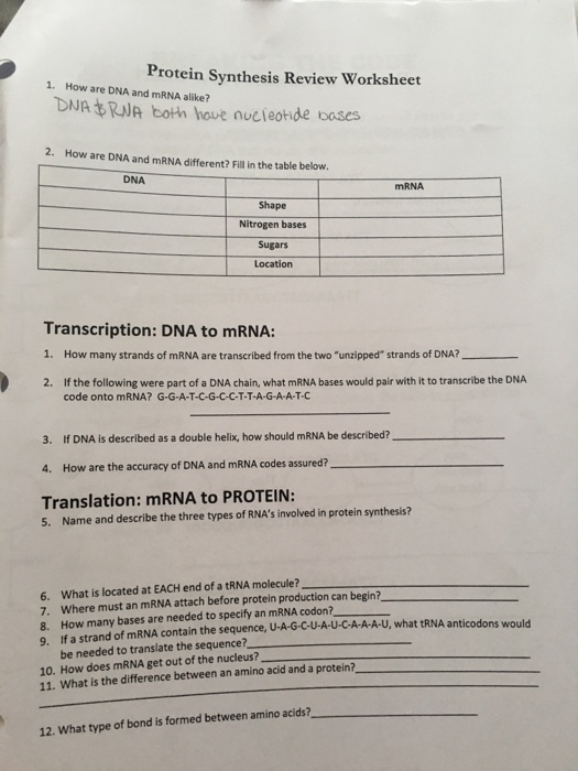 Solved: Protein Synthesis Review Worksheet 1. How Are DNA ...