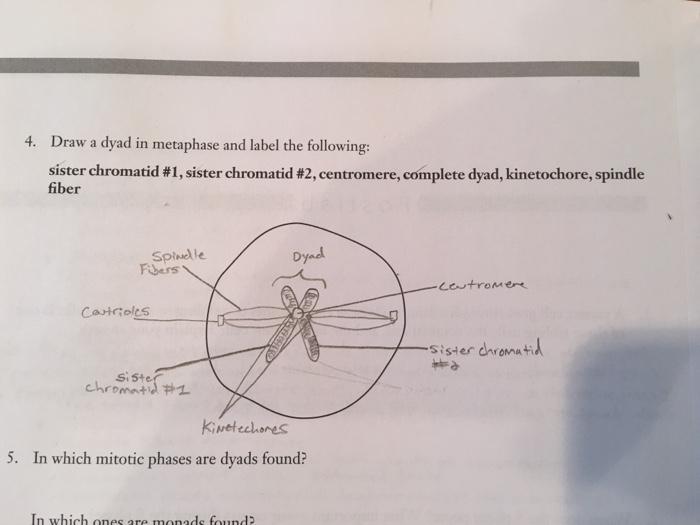 Chromatid Diagram And Label Wiring Circuit