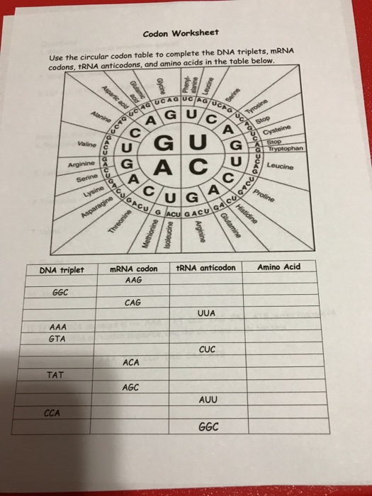 Solved: Codon Worksheet Use The Circular Codon Table To Co ...