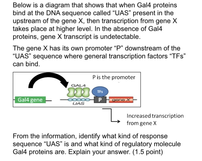 solved below is a diagram that shows that when gal4 prote rh chegg com