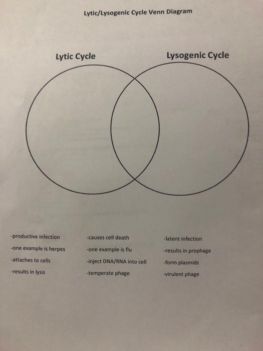 Lyticlysogenic cycle venn diagram lytic cycle lys chegg lyticlysogenic cycle venn diagram lytic cycle lysogenic cycle productive infection one example ccuart Choice Image